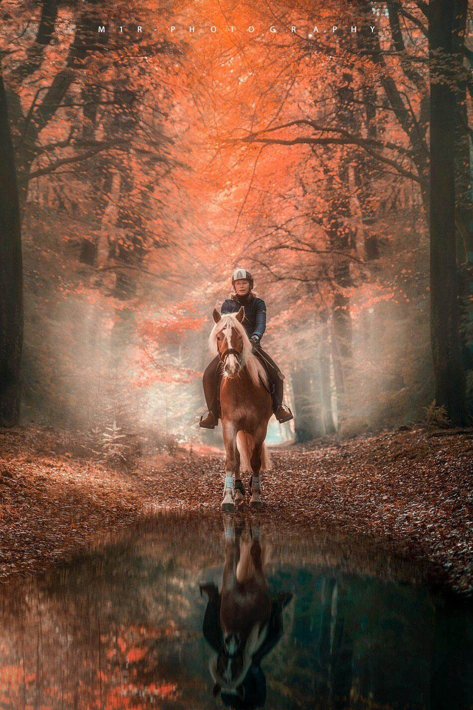 Brigitte Boss riding in the woods of Speuld Ermelo the Netherlands